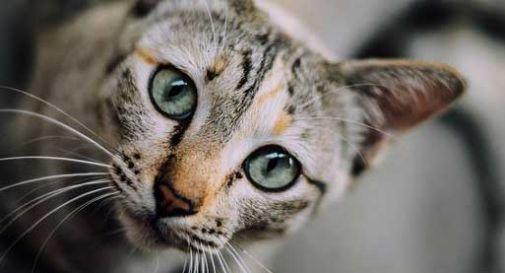 Gatti senza casa, il sindaco accoglie la colonia felina nella propria abitazione