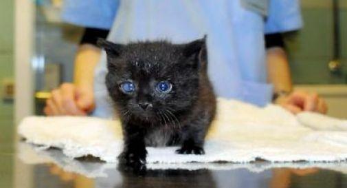 Salva gattino randagio, infermiera licenziata