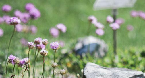 Giardino Botanico del Cansiglio