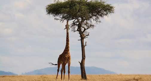 Viaggiare in Kenya: come e quando