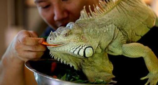 Animali esotici, è davvero possibile tenerli in casa?