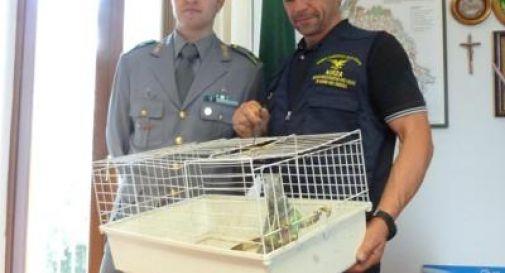 Iguana abbandonata in un cassonetto, salvata dalla Forestale