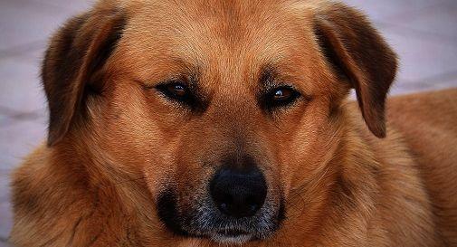 Jerry, il cagnolino che ogni giorno torna a cercare il padrone scomparso da due anni