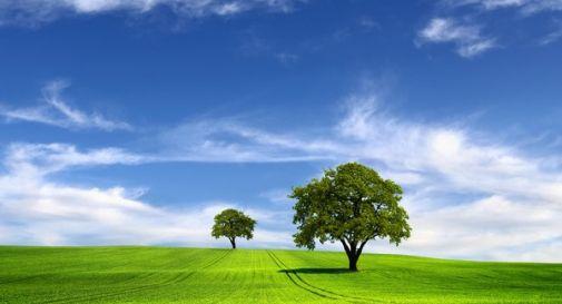 Le piccole abitudini che contribuiscono a salvare l'ambiente