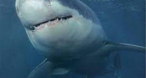 Turista ucciso da uno squalo a Marsa Alam. Era in vacanza con la moglie e i figli