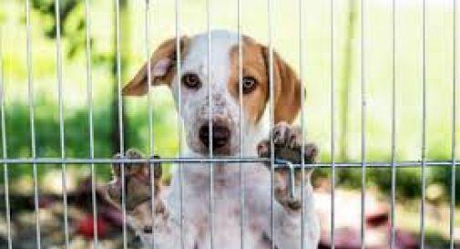 Multe da centinaia di euro per chi sporca Treviso o maltratta gli animali