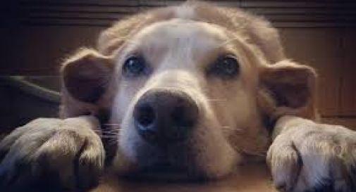Morto in casa da 20 giorni, il cane muore di fame. Trovati insieme cadaveri