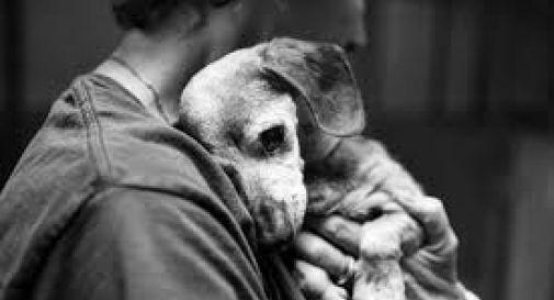 Abbandona il cane, ma quello che scoprono i vigili spiazza tutti