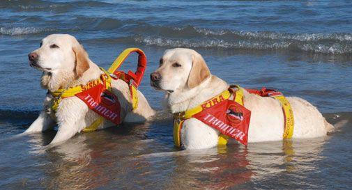 Due donne rischiano di annegare, soccorse dai cani