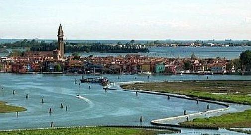 Venezia, moria pesci in laguna per crescita anomala alghe
