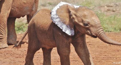 In Africa per salvare gli elefanti
