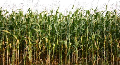 Il Comune affitta terreni da coltivare