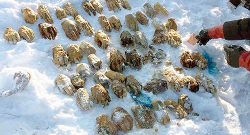 Trovata borsa con dentro 54 mani umane