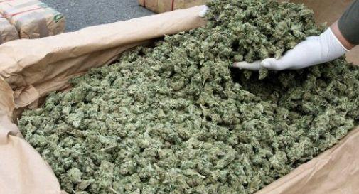 11 Kg di marijuana in valigia, arrestata