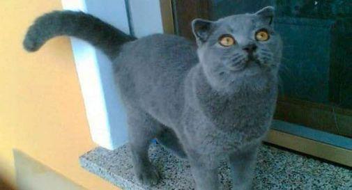 Matisse ucciso a bastonate nel giardino di casa: killer di gatti si aggira a Noventa