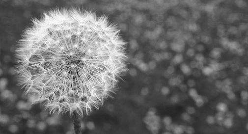 Allergia o Covid-19? Ecco come distinguerli: