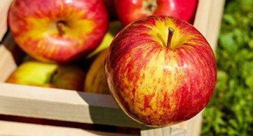 mele della solidarietà in vendita a Mogliano