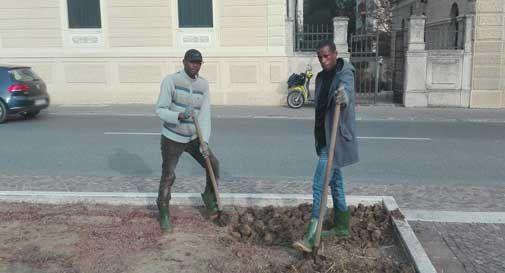Vittorio Veneto, i migranti aiutano gli operai comunali in Piazza del Popolo