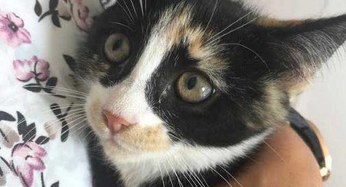 """""""Non si affitta a stranieri"""". Mamma di due bimbe rischia di finire in strada, ma la gatta chiama (e trova) aiuto"""