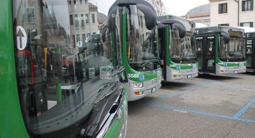 bus Treviso