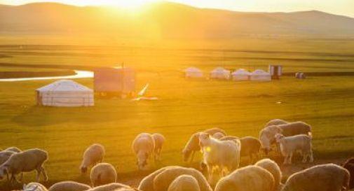 Un caso di peste bubbonica in Mongolia