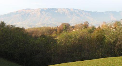 """""""Sul Montello raso al suolo un querceto in area protetta"""""""