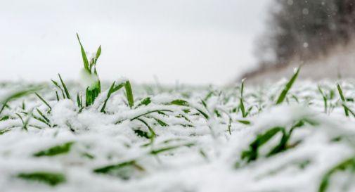 Inverno a maggio: danni per un milione all'agricoltura del Nord Est