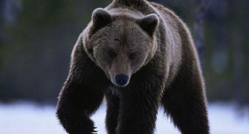 Orso svegliato dai botti scappa su pista da sci