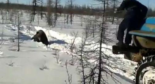 Uccidono orso in Siberia e pubblicano video su YouTube