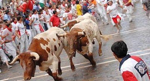 Pamplona, sangue e feriti alla corsa dei tori: grave una giovane australiana