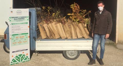 Perencin consegna alberi
