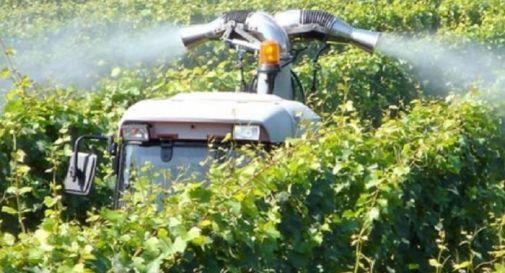 Il maltempo minaccia il Prosecco, sì anche ai pesticidi vietati