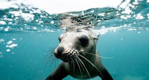 Avvistamento foca monaca in Salento