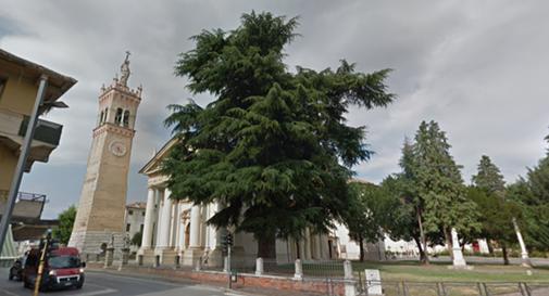 Valanga di mail al parroco per salvare l'albero che ha oltre 120 anni