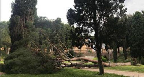 Roma, cade un pino a Castel Sant'Angelo