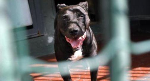 Veneto: più di 450 cani liberati dalla catena