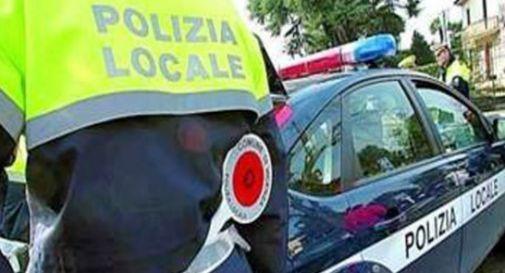 Conegliano, controlli antidroga a tappeto della polizia locale: beccati in quattro
