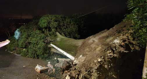 Vento fortissimo: alberi caduti e blackout a Conegliano, Vittorio Veneto e Quartier del Piave. - Oggi Treviso