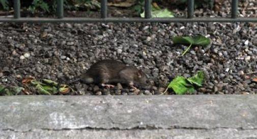 Lascia la figlia sola in casa per andare a una festa, neonata uccisa dai ratti