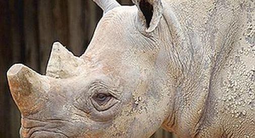 Turchia, trovato fossile di rinoceronte di 10 milioni di anni fa