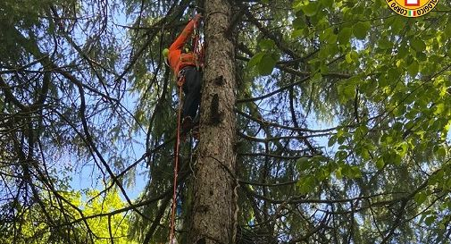 Parapendio rimane sospeso su un albero