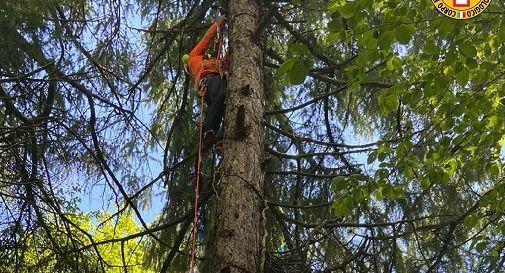 Borso del Grappa, finisce tra gli alberi col parapendio