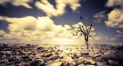 Caldo record negli ultimi 5 anni, allarme cambiamento climatico