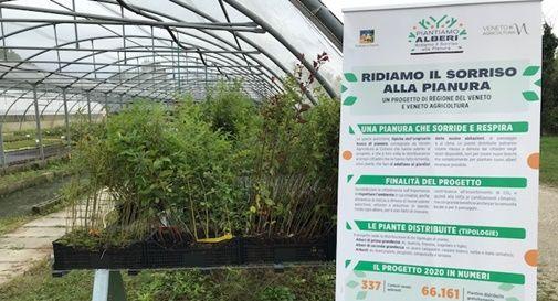 135 alberi consegnati a Silea