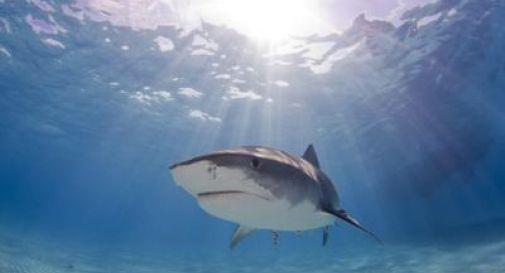 squalo in spiaggia in croazia
