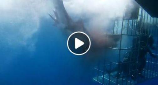 Lo squalo bianco rimane incastrato nella gabbia dei turisti, muore dopo un'interminabile agonia