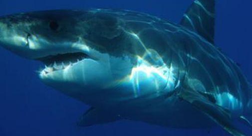 Faccia a faccia con uno squalo, l'immersione da brividi di una ragazza /Video