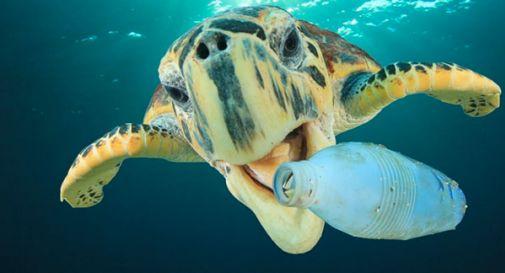 Pulizia delle spiagge italiane, Valigeria Roncato lancia il progetto Beach Cleaning