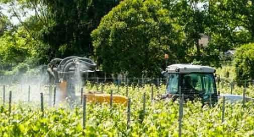 Susegana, le mamme raccolgono centinaia di firme contro i pesticidi e i vigneti