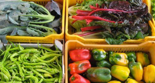 Settore agroalimentare: tutto quello da sapere sulla logistica a temperatura controllata